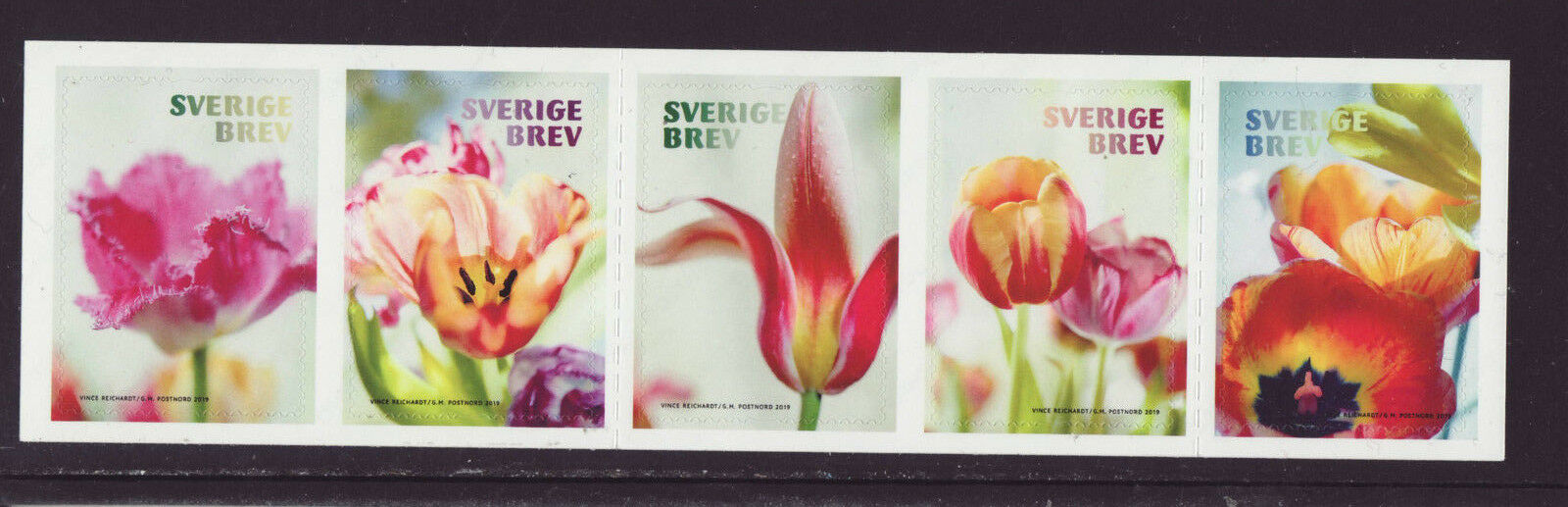 Sweden- Tulips (January 10, 2019)