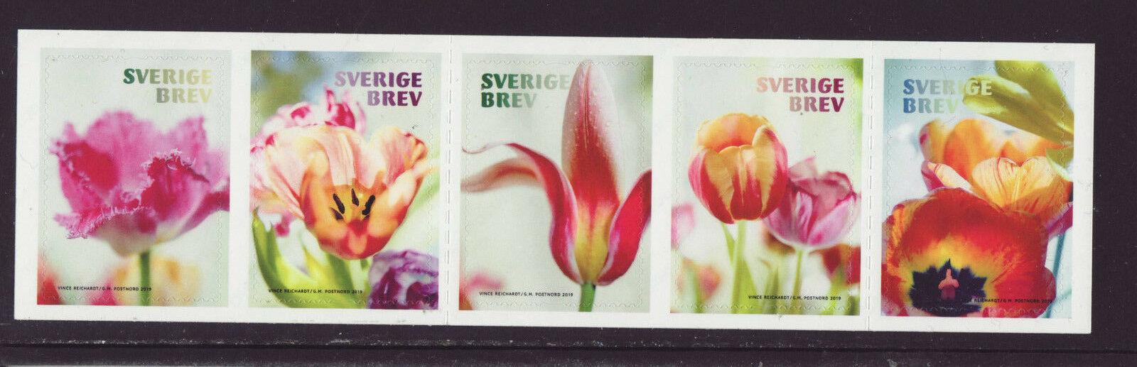 Sweden- Tulips (January 10, 2019)