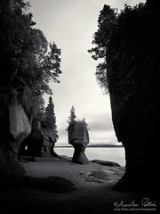 Hopewell Rocks, Rocher en pot de fleur