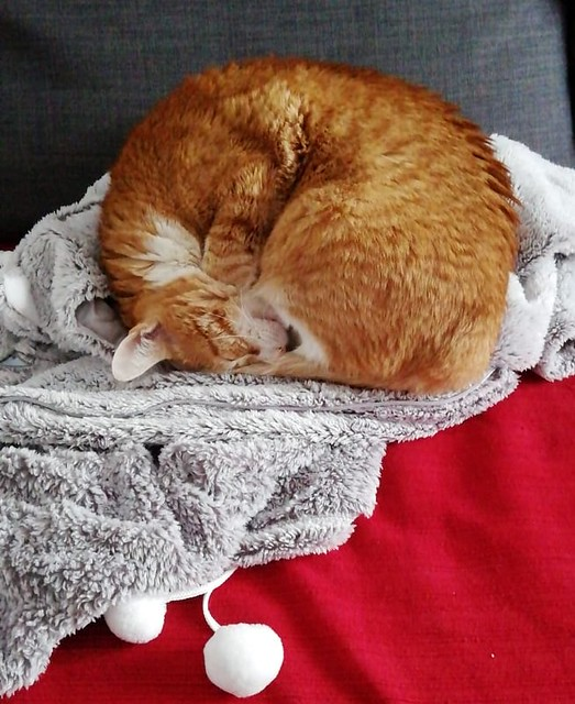 Robin, gato blanco y naranja guapo y súper dulce esterilizado, +inmunodeficiencia nacido en Marzo´15, en ADOPCIÓN ESPECIAL. Valencia. ADOPTADO. 47418781551_6c2ed46183_z