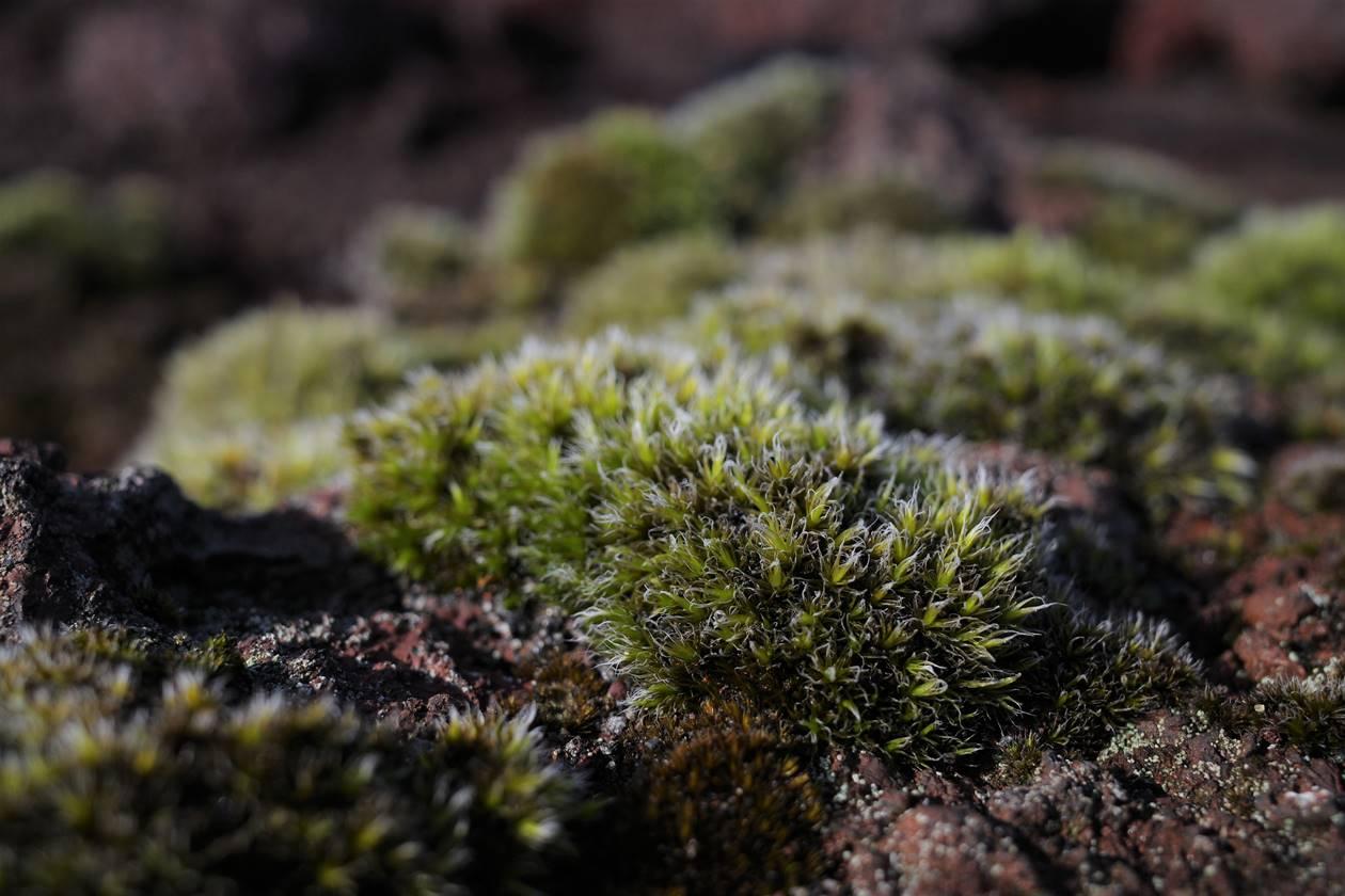 伊豆大島・三原山 火山に生える緑