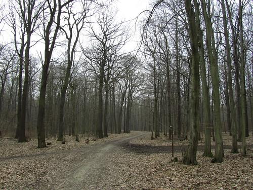 20110315 0202 137 Jakobus Wald Weg Bäume