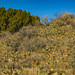 Prickly Pear Cactus in El Morro National Monument by Lee Rentz