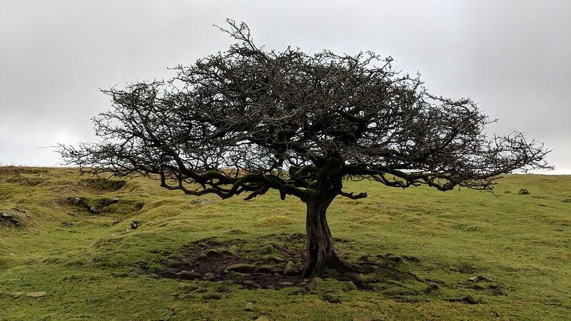 Beautiful Tree, Peek Hill