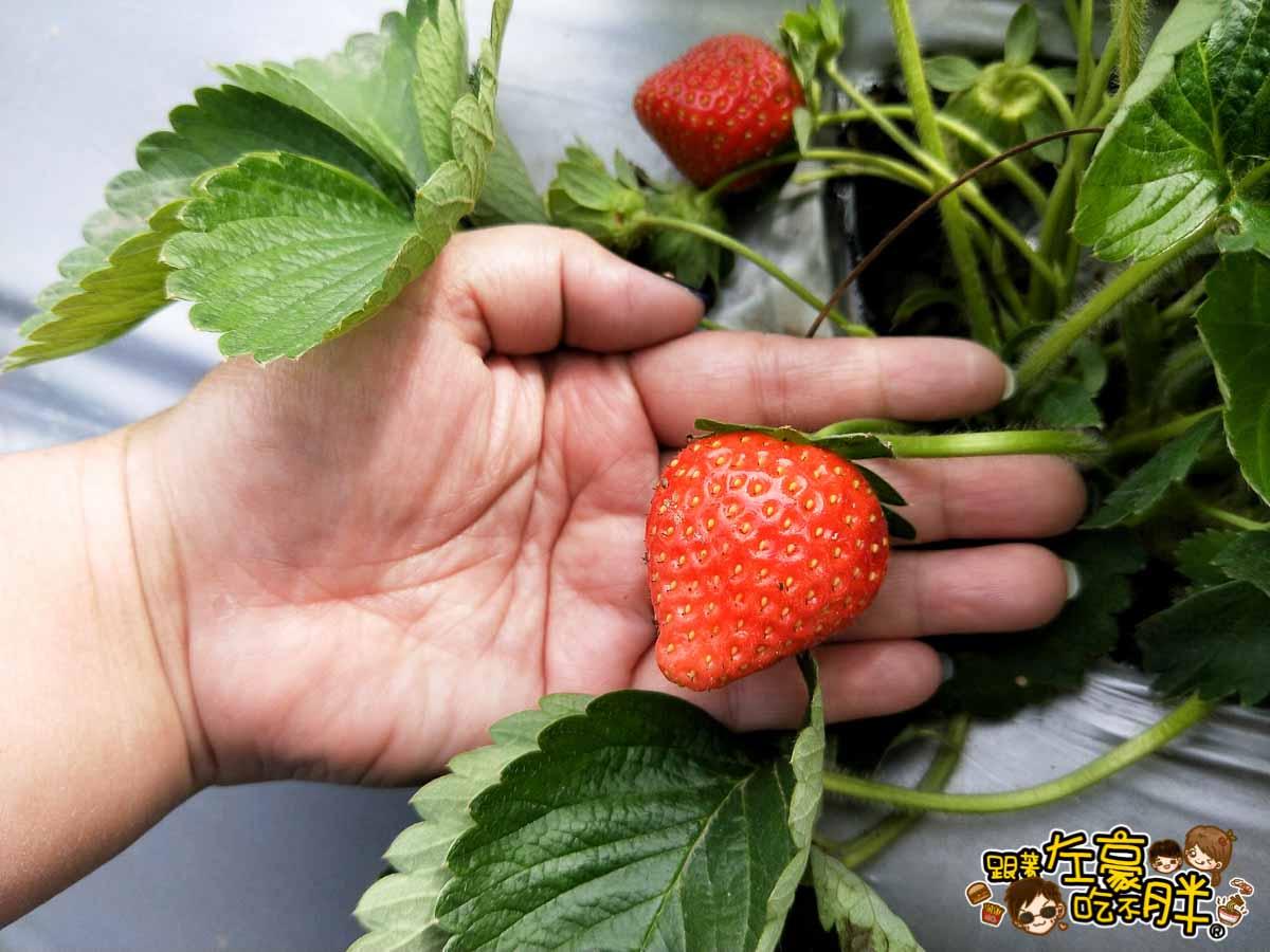 大岡山觀光草莓園-10