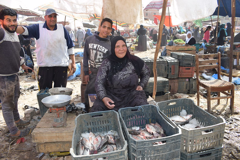 A woman selling fish with little equipment: an old weight balance, an umbrella and some ice topping the fish in a sunny day in Abu-Hammad market, Sharkia, Egypt. Photo by Mona El Azzazy, WorldFish.