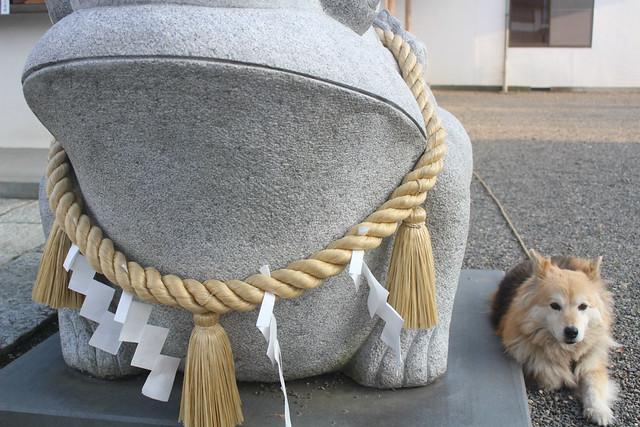 wakeikazuchi-gosyuin044