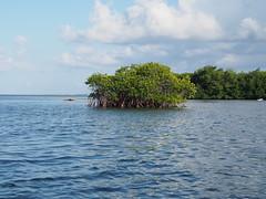 mangroveisland