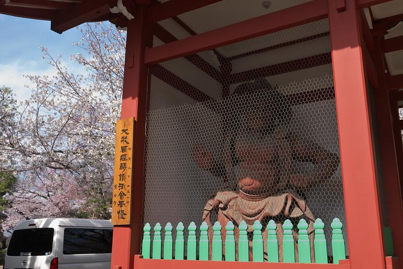 養福寺の桜