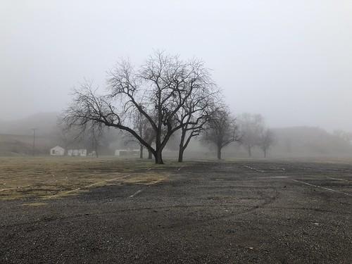 300views 200views creepy mysterious california saugus swapmeet iphone8plus oak oaktree treesinmist trees fog