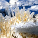 Ice Covered Grass, Lake Michigan, Dempster Street Beach, Evanston, January 20, 2019 151 bpz full by stew says ישעיה טשערויין