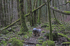 DSC_0965 Nyima dans le vallon de Raffenot