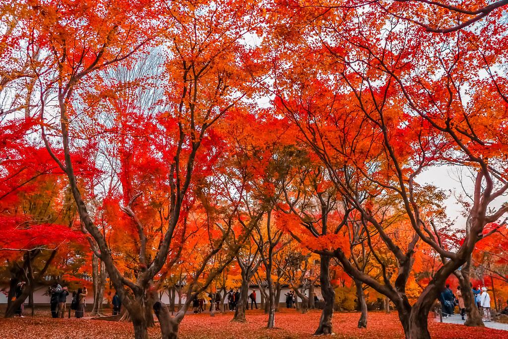 kyoto-temples-alexisjetsets-15