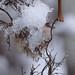 Winter fun by herman hengelo