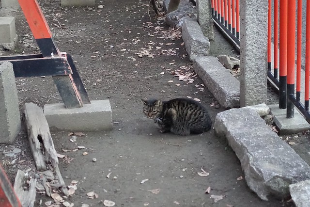 Today's Cat@2019-02-09