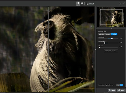 Screenshot of Monkey image showing original and Sharpen AI filter applied