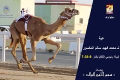 صور منافسات سباق اللقايا (الأشواط العامة) مهرجان سمو الأمير الوالد صباح 5- 3-2019