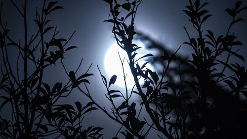 2019 Spring Equinox Super Worm Moon
