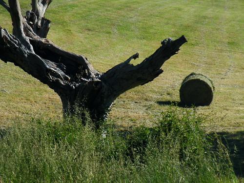 20090603 053 1113 Jakobus Baum Holzkunst Heuballen_K