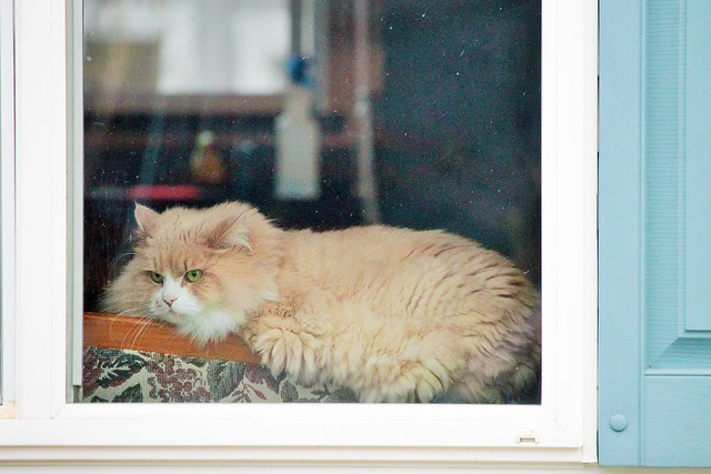 How much is that kitty in the window?