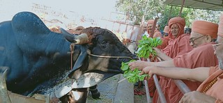 feeding the cows and giving clothes to tha poor people