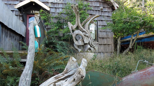 Weathered driftwood in a yard in Ucluelet on Vancouver Island, BC, Canada