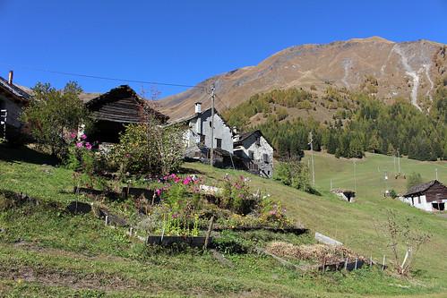 Bergweiler Calcarida