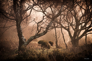 Woodland Tangle | by Geoff Moore UK