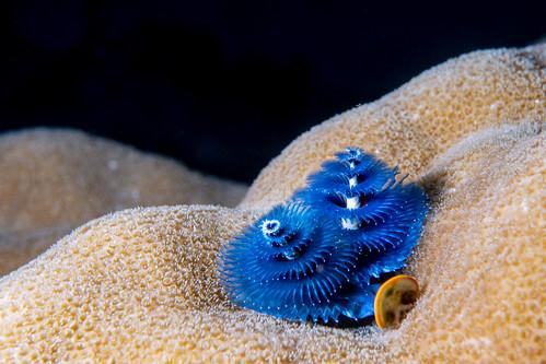 Undersea Tree