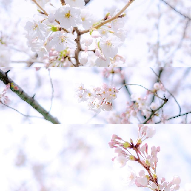 春の息吹1