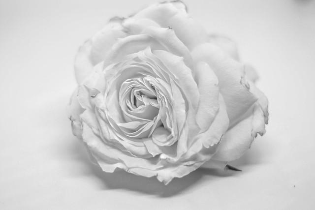 Rose (Black & White Version), Nikon D7100, AF-S DX Nikkor 35mm f/1.8G