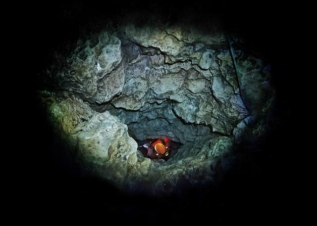 beanintransit-lobo-cave-7