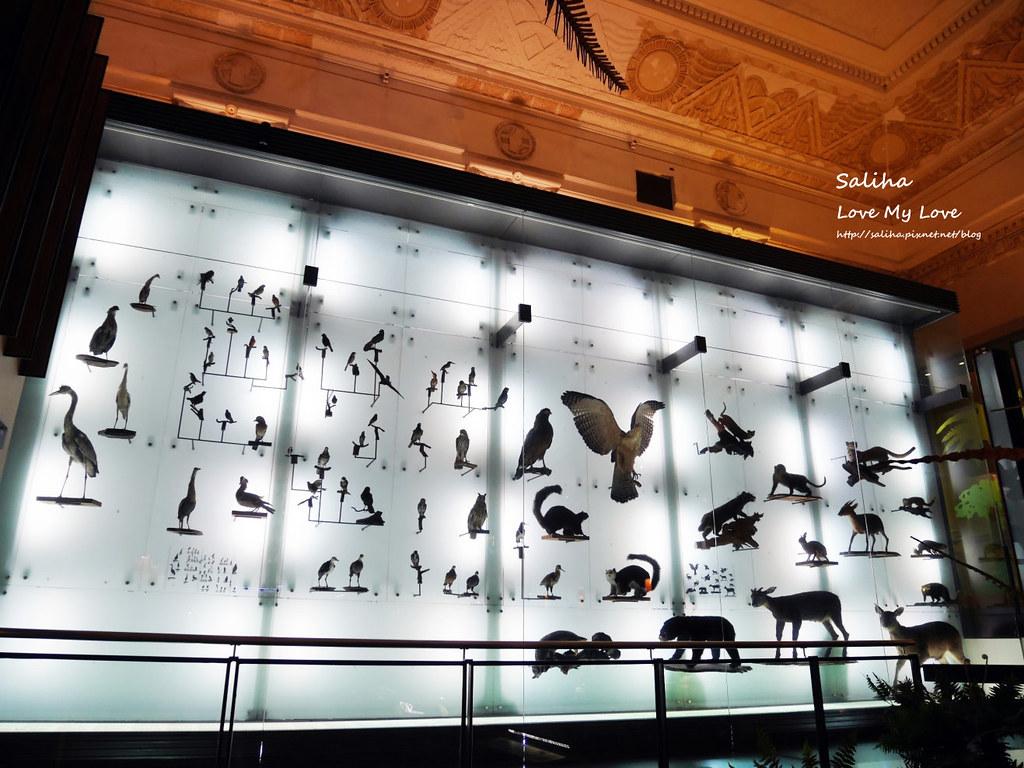台北車站附近好玩親子景點恐龍博物館門票台博館土銀展示館 (1)