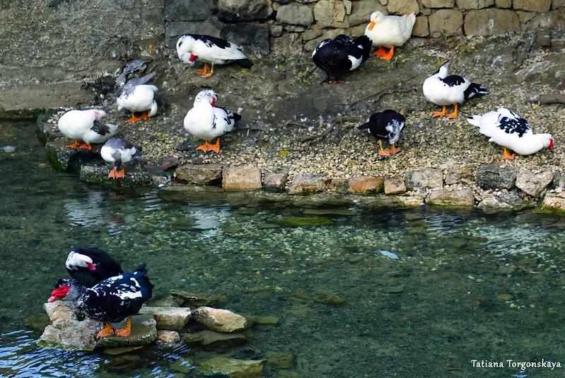 Берег Брегавы с утками