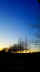 a line of trees at sunset