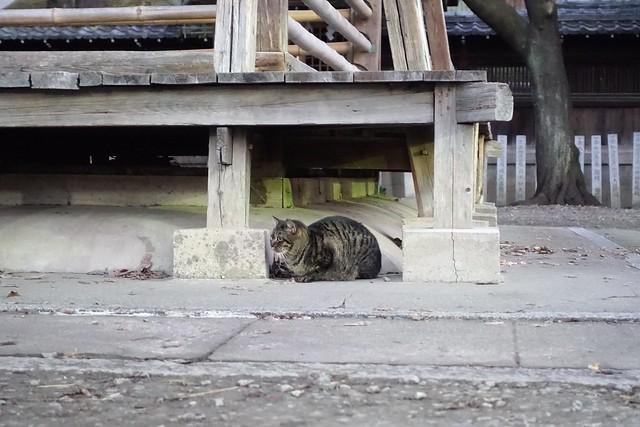 Today's Cat@2019-01-18