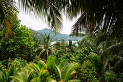 Jungle view, Ko Phangan (Thailand)