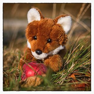Foxi found an apple