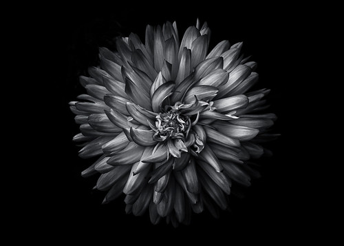 Backyard Flowers In Black And White 20