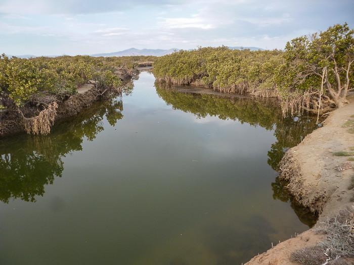 Chinaman's Creek - Winninowie Conservation Park.