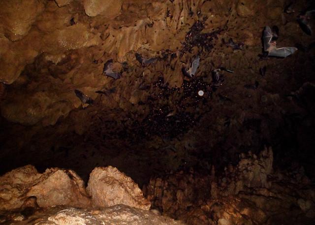 beanintransit-lobo-cave-26