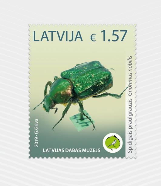 Pastmarka Latvijas Dabas muzeja unikālie eksponāti - Spīdīgais praulgrauzis