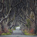 The Dark Hedges by Andrew G Robertson