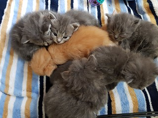 Kitten Cuddle Pile