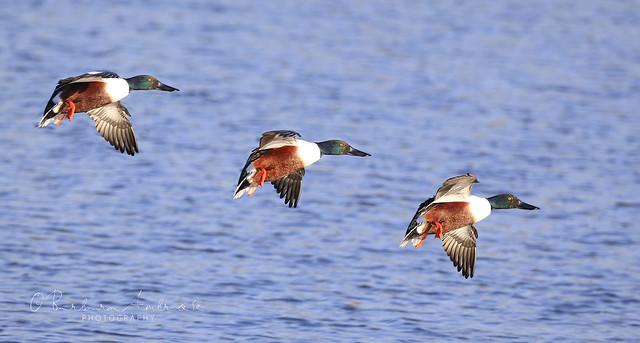 Hilda's birds