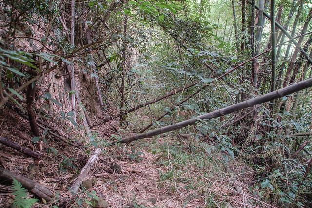 茶青角山前段廢棄產道 1