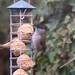 Big Garden Birdwatch 2019