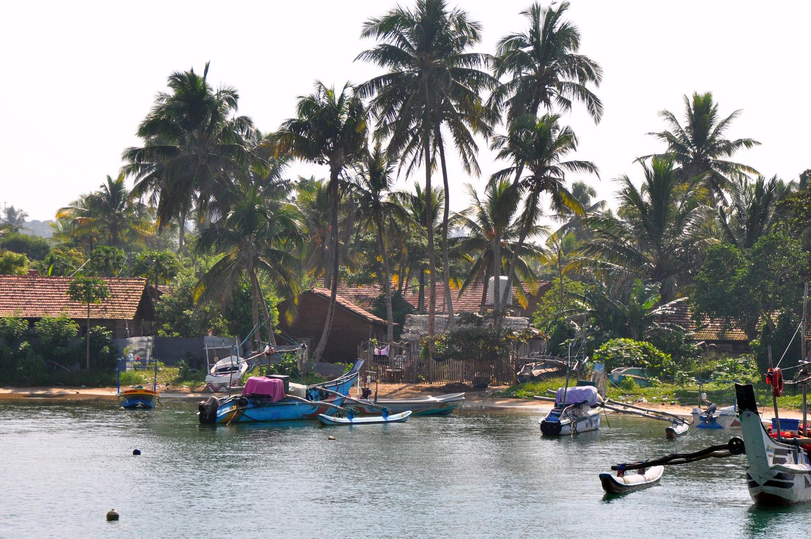 Qué hacer en Unawatuna, Sri Lanka qué hacer en unawatuna - 33260199008 769ec55cde h - Qué hacer en Unawatuna, el paraíso de Sri Lanka
