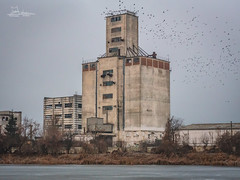 Abandoned factory, Barlad, Romania