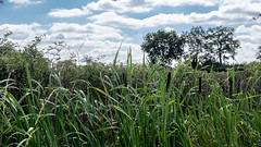 Brenne bulrushes - Photo of Pouligny-Saint-Pierre